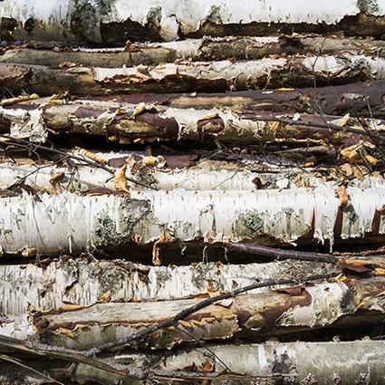 wood_cut