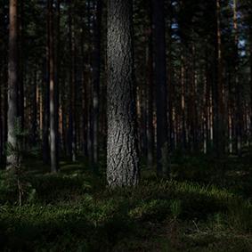 Ohne Titel (Türe/Wald)